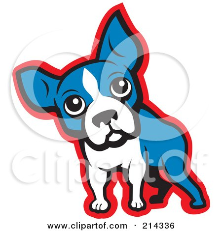 Curious Blue, White And Red Boston Terrier Dog Posters, Art Prints