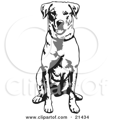 Clipart Illustration of an Obedient Labrador Retriever Dog Seated And Facing Front, Waiting For A Command by David Rey