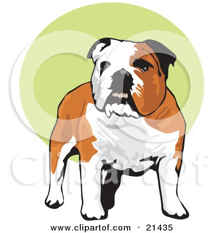 Clipart Illustration of a Happy Brown And White Bulldog Standing Over A Green And White Background by David Rey