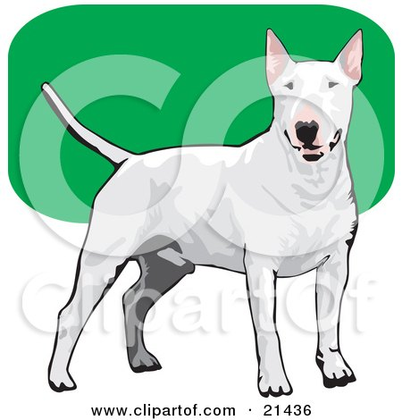 Clipart Illustration of a Friendly White Bull Terrier Dog Wagging Its Tail And Facing Front Over A Green And White Background by David Rey