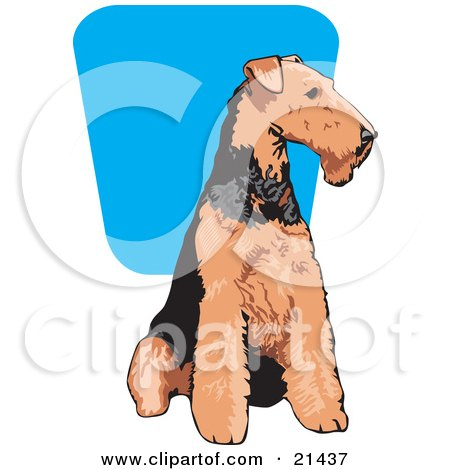 Clipart Illustration of a Brown And Black Airedale Terrier Dog Seated And Looking To The Right by David Rey