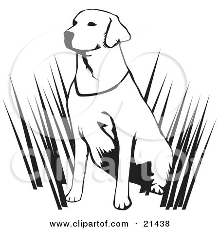 Clipart Illustration of an Alert Labrador Retriever Dog Hunting With His Master, Sitting In Tall Grasses And Waiting, On A White Background by David Rey