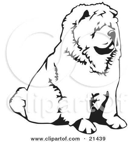 Clipart Illustration of a Chow Chow Dog Sitting And Facing To The Right, Over A White Background by David Rey