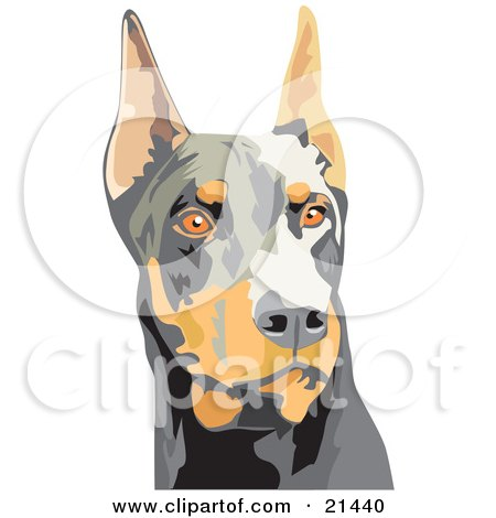 Clipart Illustration of an Alert Brown And Black Doberman Pinscher Dog, Or Dobie, With Cropped Ears, On A White Background by David Rey
