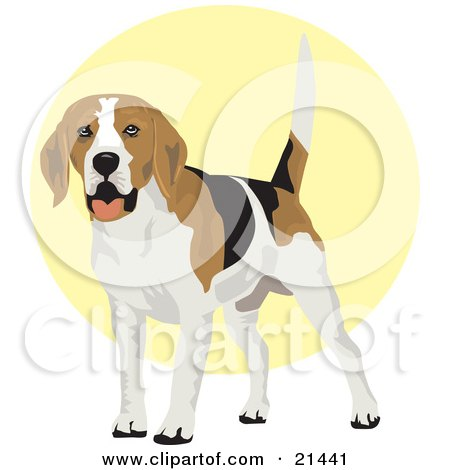 Clipart Illustration of a Friendly White, Tan And Black Beagle Dog Wagging His Tail by David Rey
