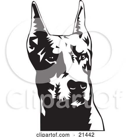 Clipart Illustration of a Doberman Pinscher Or Dobie Dog Wiith Cropped Ears, On A White Background by David Rey
