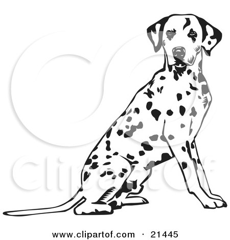 Clipart Illustration of an Alert Spotted Dalmation, Or Dalmatian, Dog Seated With Its Body Facing Right, Looking At The Viewer by David Rey