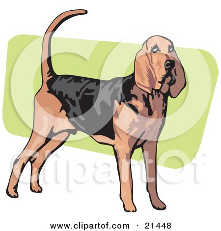 Clipart Illustration of an Alert Brown And Black Bloodhound, Also Known As The St. Hubert Hound, Standing Over A Green And White Background by David Rey