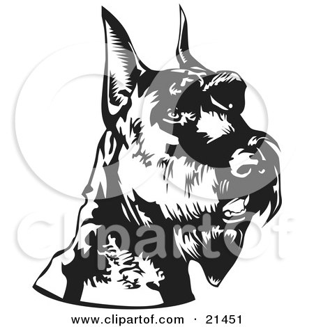 Clipart Illustration of an Alert Schnauzer Dog With Cropped Ears, Facing Right, Over A White Background by David Rey