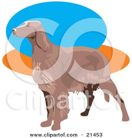 Clipart Illustration of a Brown Irish Setter Dog Facing To The Left Over A Blue, Orange And White Background by David Rey