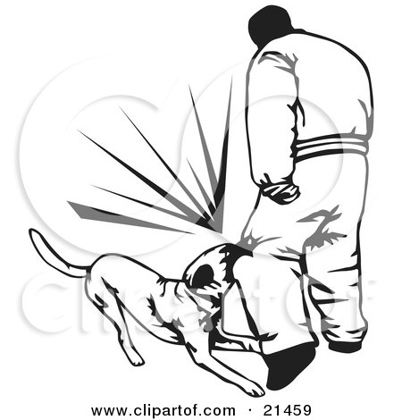 Clipart Illustration of a Trained Guard Dog Attacking An Intruder And Biting Him On The Knee, On A White Background by David Rey