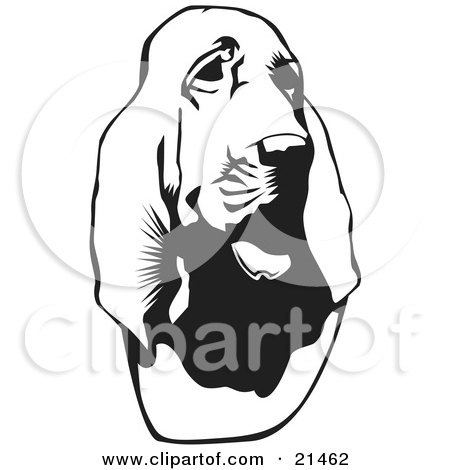 Clipart Illustration of a Bloodhound, Or St. Hubert Hound, Looking Slightly To The Right, On A White Background by David Rey