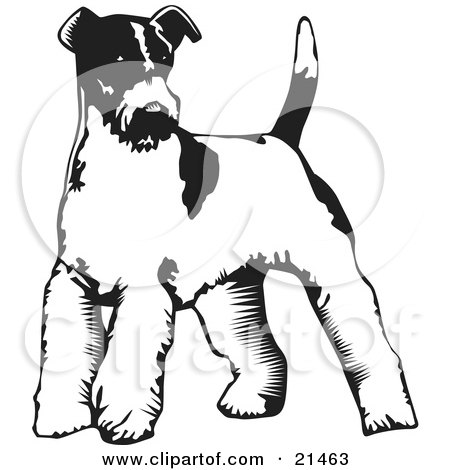 Clipart Illustration of a Wire Fox Terrier Dog Standing On A White Background by David Rey