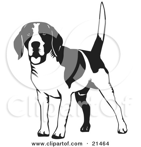 Clipart Illustration of a Happy Beagle Dog Wagging His Tail, On A White Background by David Rey