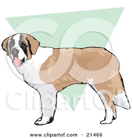 Clipart Illustration of a Friendly Brown And White St Bernard Dog Standing Over A Green And White Background by David Rey