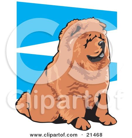 Clipart Illustration of an Obedient Brown Chow Chow Dog With A Black Tongue, Seated And Facing Right, On A Blue And White Background by David Rey