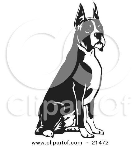 Clipart Illustration of an Obedient Boxer Dog With Cropped Ears, Seated And Facing To The Right by David Rey