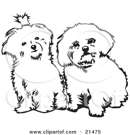 Clipart Illustration Of Two Cute Maltese Dogs Sitting Side By Side