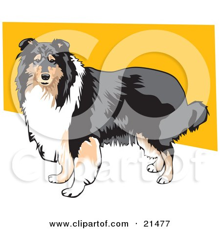 Clipart Illustration of a Long Haired Brown, White And Black Collie Dog Standing Against A Yellow And White Background by David Rey