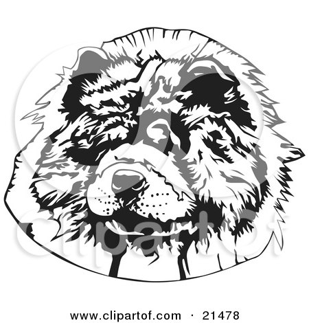 Clipart Illustration of The Face Of A Hairy Chow Chow Dog Looking Slightly To The Left, On A White Background by David Rey