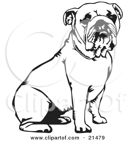 Clipart Illustration of a Cute And Obedient Bulldog Seated, Over A White Background by David Rey