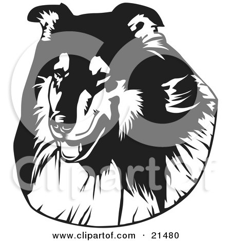 Clipart Illustration of The Face Of A Long Haired Collie Dog, Over A White Background by David Rey