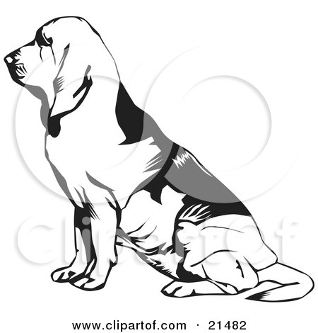 Clipart Illustration of a Seated Bloodhound, Or St. Hubert Hound, In Profile, Facing To The Left by David Rey