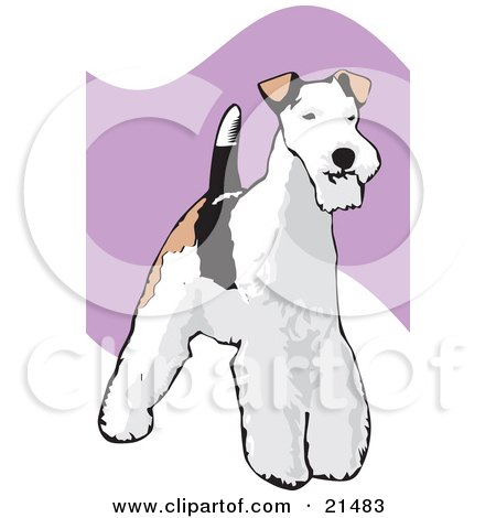 Clipart Illustration of a Standing And Alert Wire Fox Terrier Dog With A White, Black And Brown Coat by David Rey