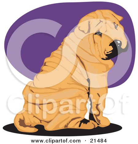 Clipart Illustration of a Cute Wrinkled Brown Shar Pei Dog Seated And Looking Back Over His Shoulder by David Rey