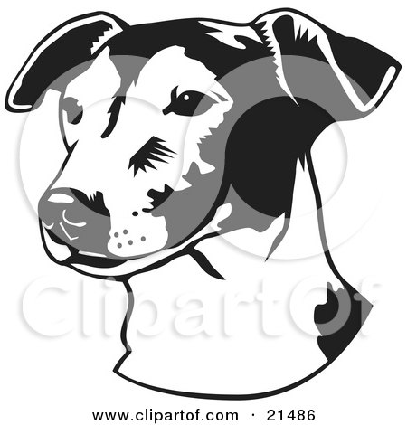 Clipart Illustration of a Jack Russell Terrier Dog, Or Jrt, Looking Off To The Left, Over A White Background by David Rey
