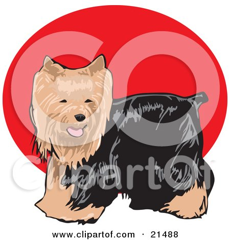 Clipart Illustration of a Friendly Long Haired Brown And Black Yorkshire Terrier Dog, Or Yorkie by David Rey