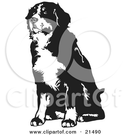 Clipart Illustration of a Seated Bernese Mountain Dog Facing Slightly To The Left, On A White Background by David Rey