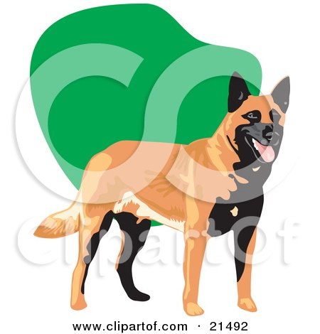 Clipart Illustration of a Panting Black And Brown Belgian Sheepdog Standing In Front Of A Green And White Background by David Rey