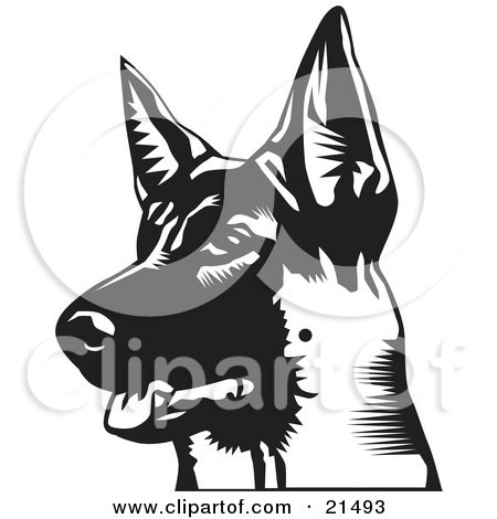 Clipart Illustration of an Alert German Shepherd With His Mouth Slightly Open, Looking Off To The Left, On A White Background by David Rey