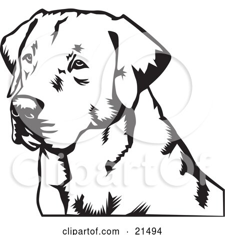 Clipart Illustration of a Labrador Retriever Dogs Face, Looking Off To The Left by David Rey