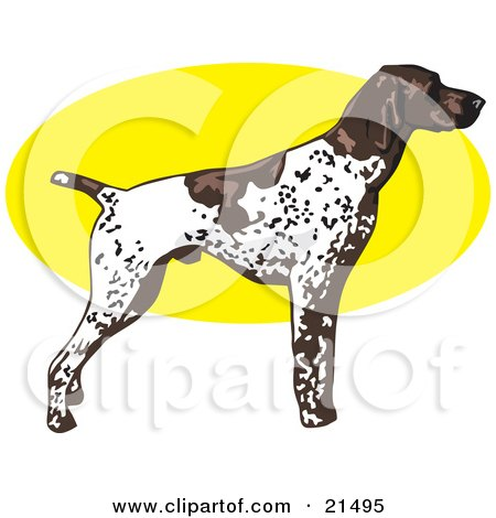 Clipart Illustration of a White And Brown Spotted German Shorthair Pointer Dog Standing Alert In Profile, Facing Right by David Rey