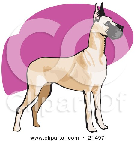 Clipart Illustration of an Alert Brown And Black Great Dane Dog With Cropped Ears, Standing And Facing To The Right by David Rey