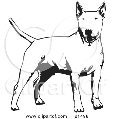 Clipart Illustration of an Alert Bull Terrier Dog Holdings Its Tail Out And Facing Front, On A White Background by David Rey