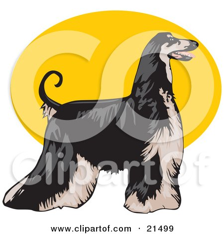 Clipart Illustration of a Long Haired Afghan Hound Dog, Standing Proudly In Profile, Facing To The Right Over A Yellow Oval On A White Background by David Rey