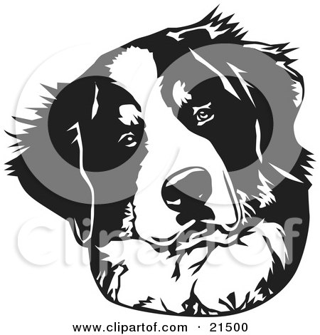 Clipart Illustration of a Curious Bernese Mountain Dog Tilting His Head, On A White Background by David Rey