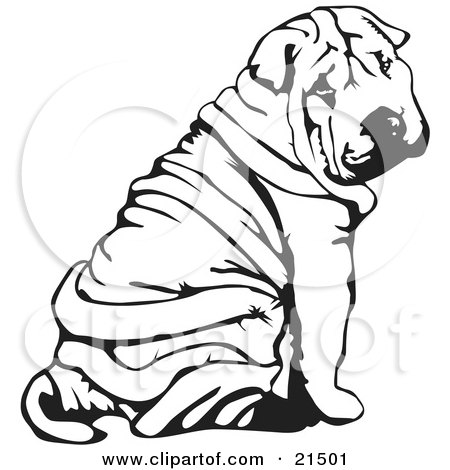 Clipart Illustration of a Wrinkled Chinese Shar Pei Dog, Sitting And Looking Back Over His Shoulder by David Rey