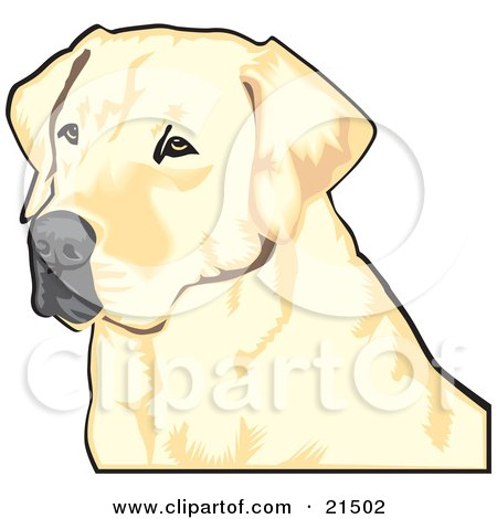 Clipart Illustration of a Yellow Labrador Retriever Dog With A Black Nose, Waiting Patiently And Looking Off To The Left While Hunting by David Rey