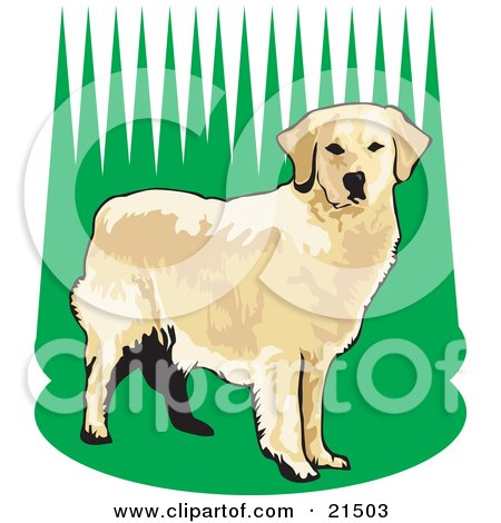 Clipart Illustration of an Alert Golden Retriever Dog Standing In Tall Green Grass, Waiting To Fetch While Hunting by David Rey
