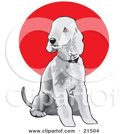 Clipart Illustration of a Seated Gray Bedlington Terrier Dog Wearing A Collar And Looking Off To The Left by David Rey