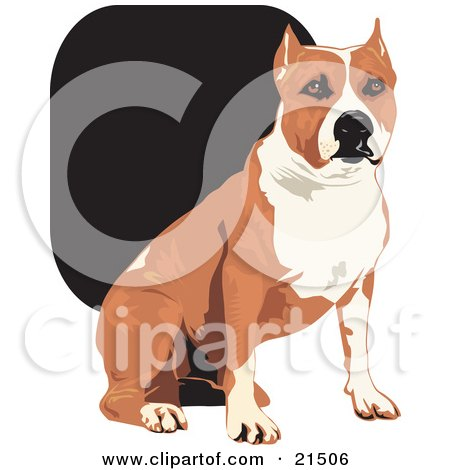 Clipart Illustration of a Tan And White American Staffordshire Terrier Dog Sitting And Looking Forward by David Rey