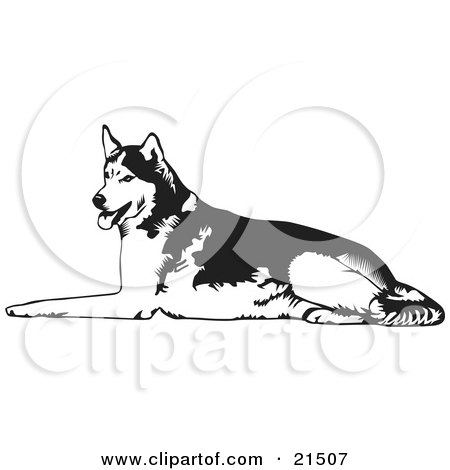 Clipart Illustration of a Tired Husky Dog Lying On The Ground And Panting After Sledding by David Rey