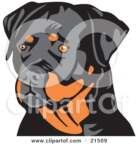 Clipart Illustration of an Alert Tan And Black Rottweiler Dog Looking To The Left, Over A White Background by David Rey