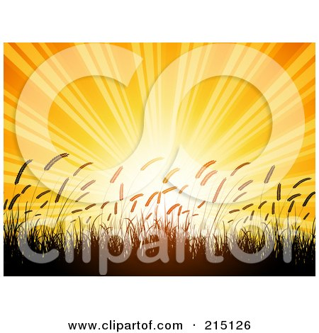 Royalty-Free (RF) Clipart Illustration of a Bright Orange Summer Sunset Shining Over Silhouetted Wheat by KJ Pargeter