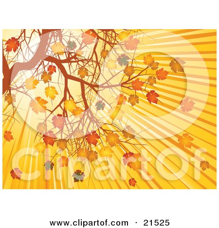 Clipart Illustration of Bright Sunlight In The Morning Sunrise, Shining Down On Autumn Leaves On A Tree Branch by elaineitalia