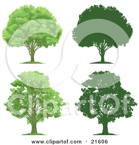 Clipart Illustration Graphic of a Collection Of Lush Green And Mature Trees With Their Silhouettes, On A White Background by Tonis Pan